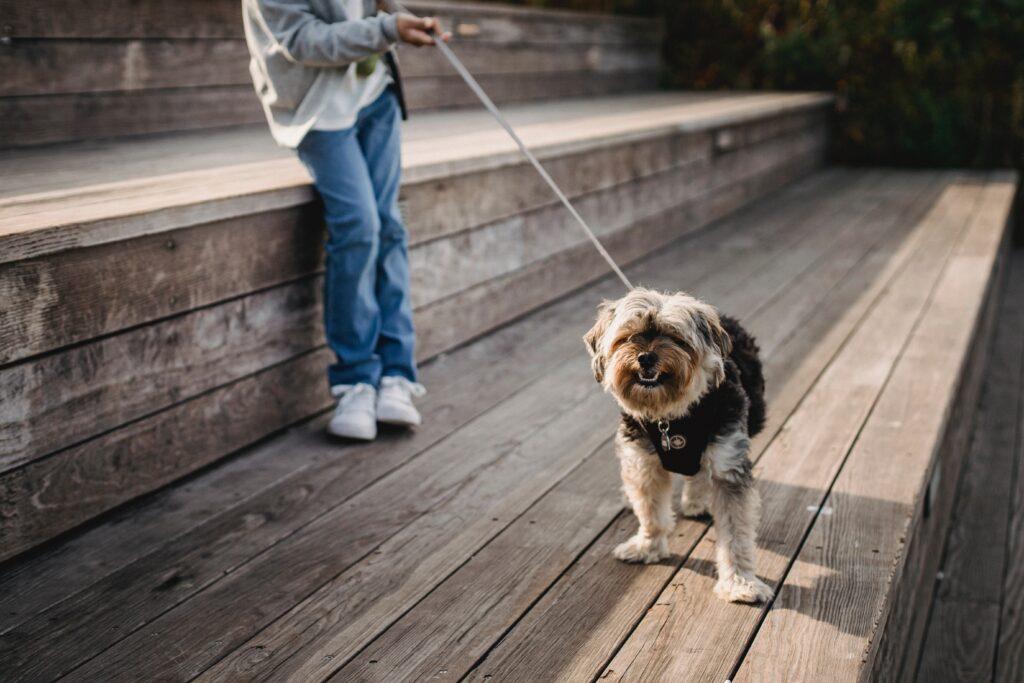 pet-sector-translation-services
